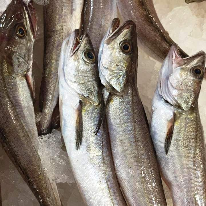 pescadilla fresca