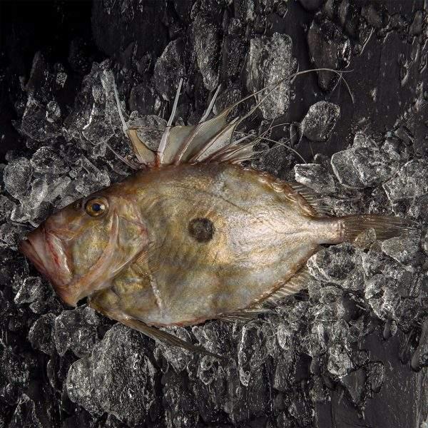 Gallo Pedro pescado