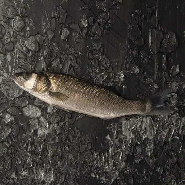 lubina pescado