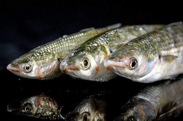 comprar pescado a domicilio