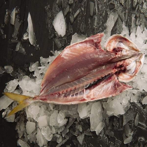 pescado jurela