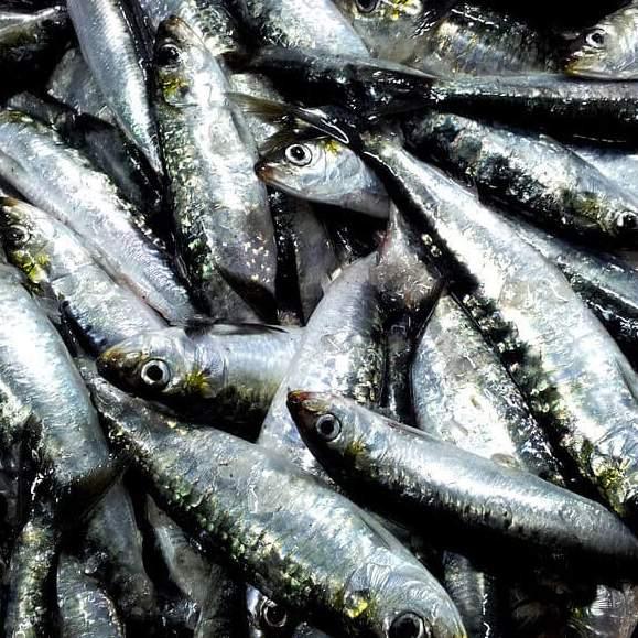 comprar sardina