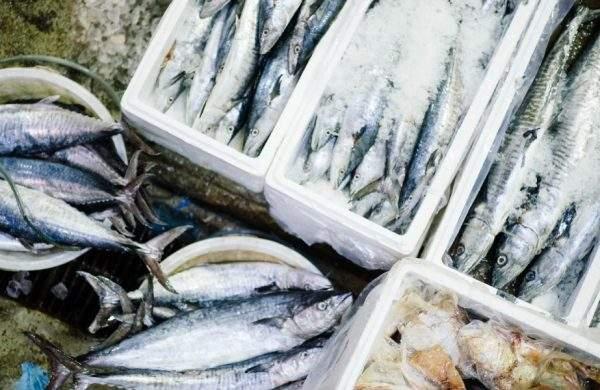 pescados de temporada